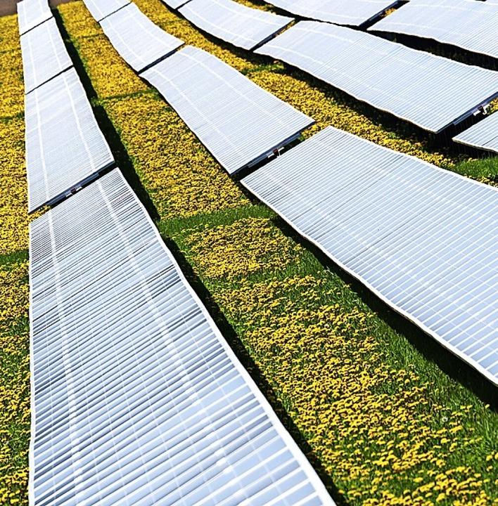 Thema im Gemeinderat Schönau: Photovoltaikanlagen auf Freiflächen  | Foto: Nicolas Armer