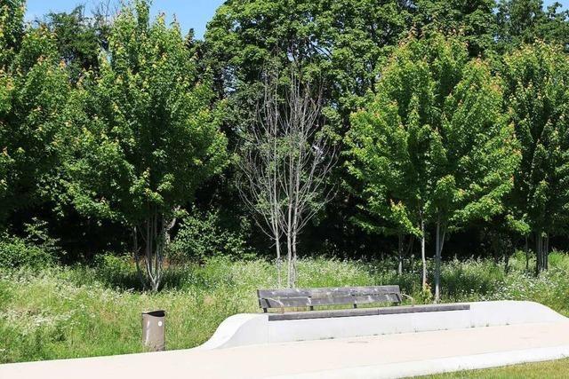 Bereits 35 junge Bäume auf dem Landesgartenschaugelände sind tot