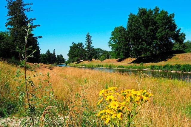 Im Landschaftspark Wiese fühlen sich nicht nur Feldhasen wohl