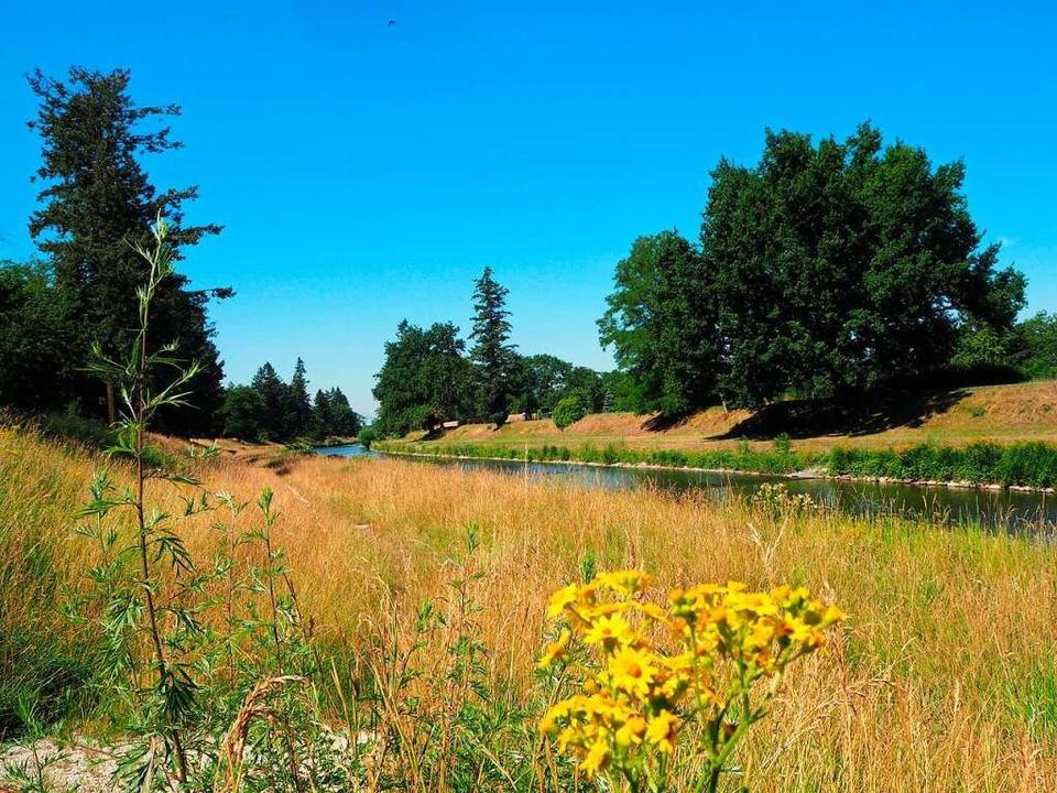Das vom Fluss Wiese durchflossene Gebiet ist reich an Tier- und Pflanzenarten.  | Foto: Rangerdienst Landschaftspark Wiese