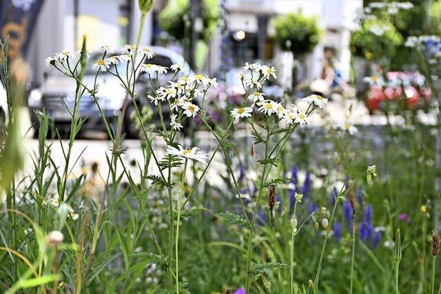 Kräuterwiesen in der Stadt