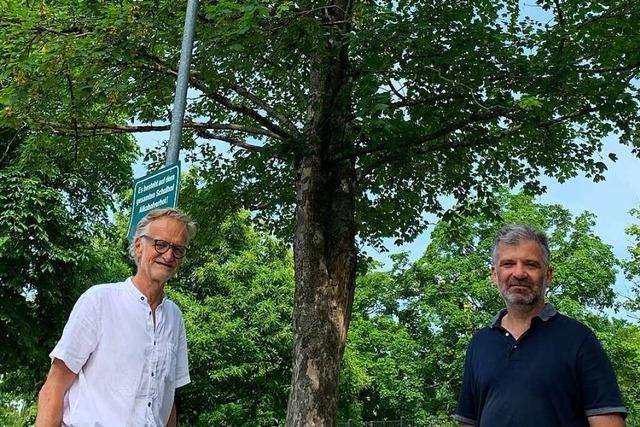 Wie Heitersheim das Problem mit seinen gestressten Stadtbäumen angeht