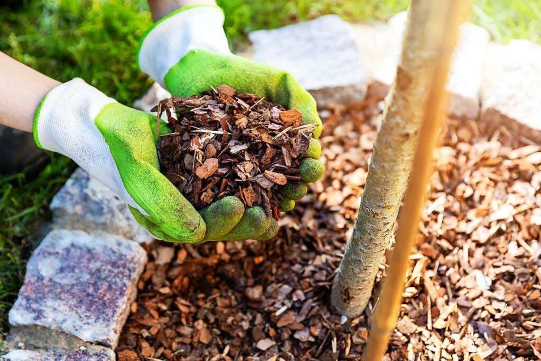 Spart Arbeit und sieht ordentlich aus ...hlen Gartenmagazine gerne Rindenmulch.  | Foto: ronstik