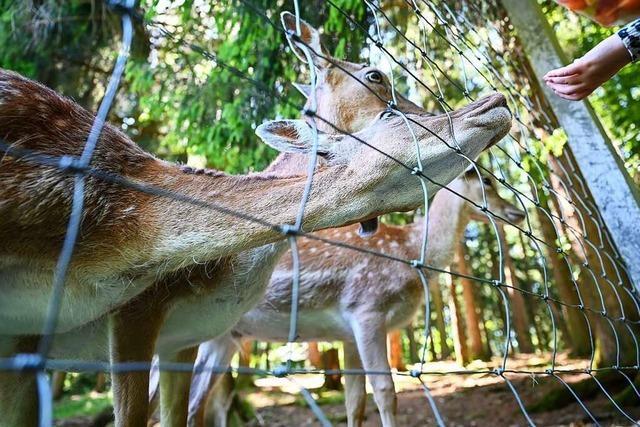 Der zunehmende Natur-Tourismus bringt Tiere in Gefahr