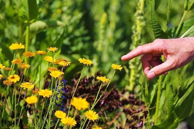 Der Naturschutzbund lobt die Gestaltung von Grünflächen in Ettenheim