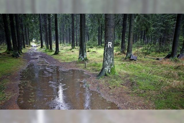 Wie das Klima den Waldwegen zusetzt