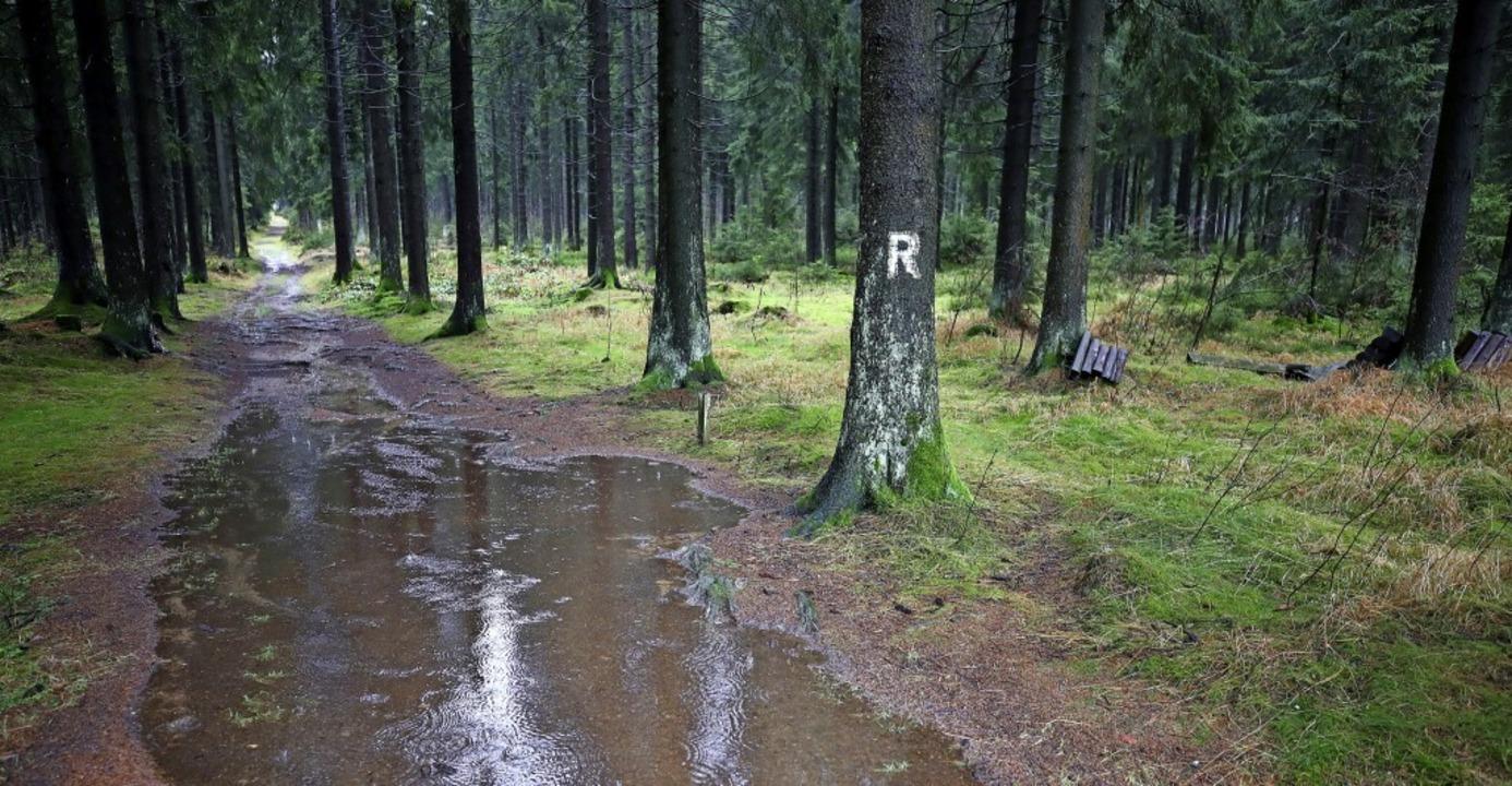 Regen ist wichtig für den Wasserhausha...s Wasser oft auf Wegen den Hang hinab.    Foto: Bodo Schackow