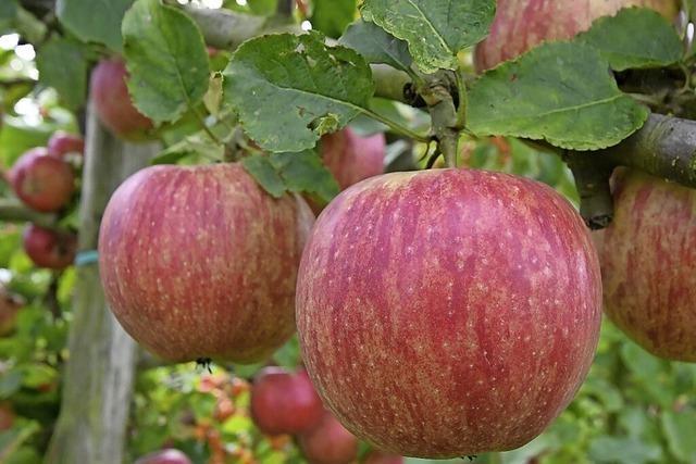 Ärger um Obstzäune in Auggen