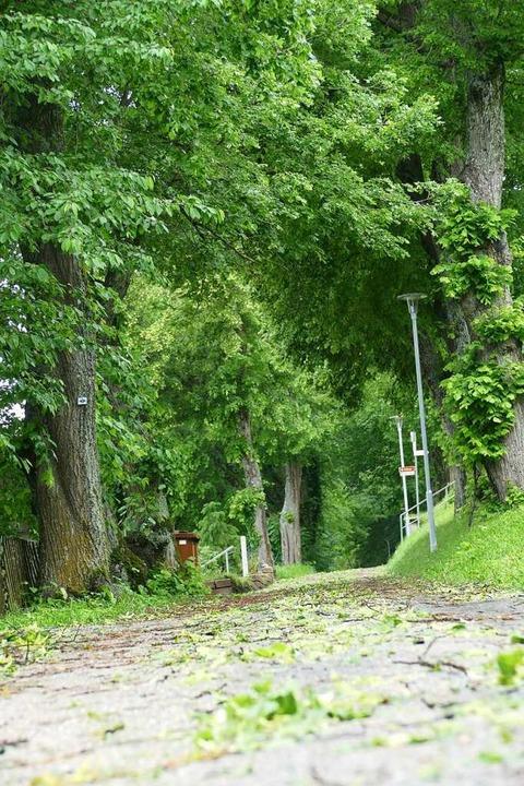 Das Hagelwetter schlug viel Laub auch im Philosophenweg von den Bäumen.  | Foto: Stefan Limberger-Andris