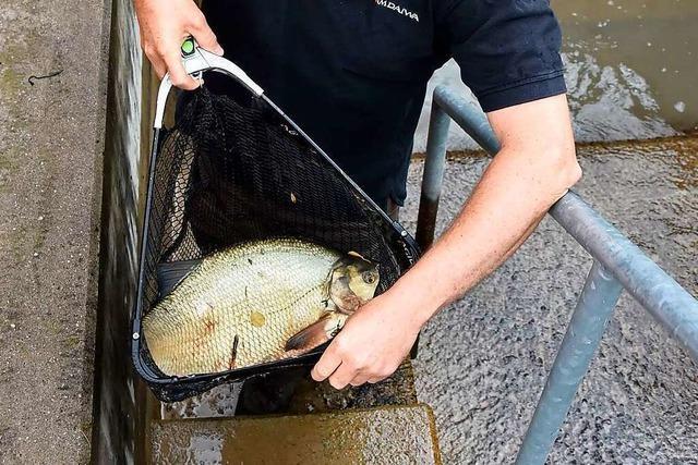 Fischaufstiege am Wasserkraftwerk Wyhlen dienen auch der Stromerzeugung