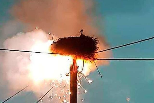 Blitzeinschlag: Feuerwehr rettet Störche von brennendem Strommast