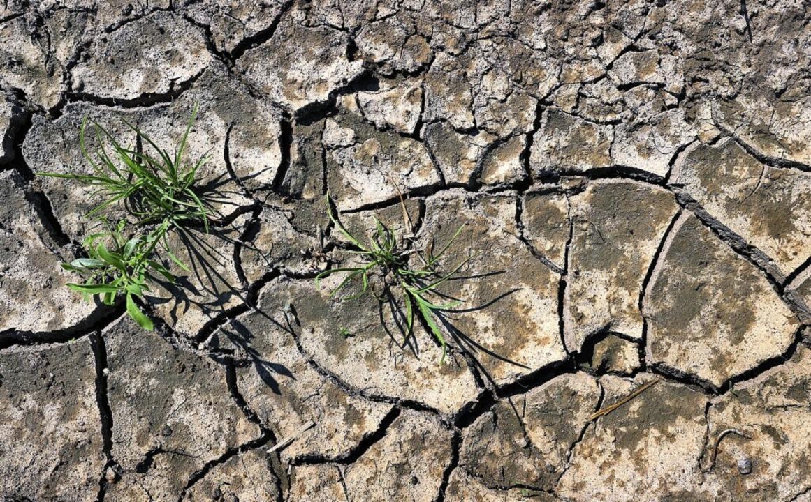 Durch die zunehmende Trockenheit werden weitere Arten aussterben.    Foto: Karl-Josef Hildenbrand (dpa)