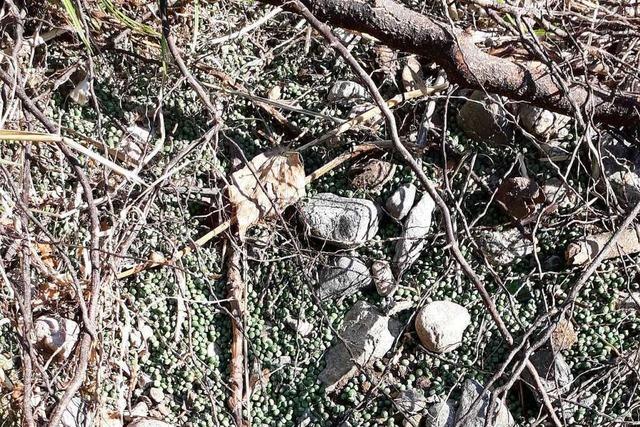 Fortgespültes Granulat hält sich hartnäckig in der Umgebung