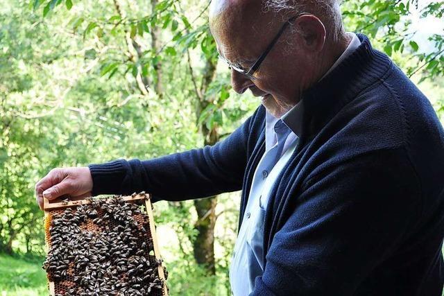 Imkerverein St. Peter gibt mittwochs Tipps und Ratschläge rund ums Thema Bienen