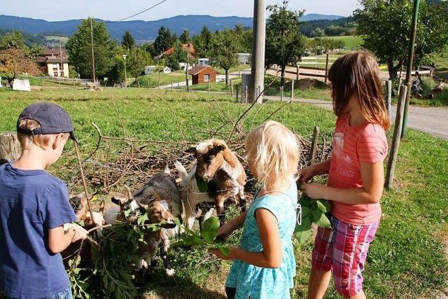 Ferien auf dem Kirnermarteshof in Oberried vereint Bauernhof, Camping und Wellness