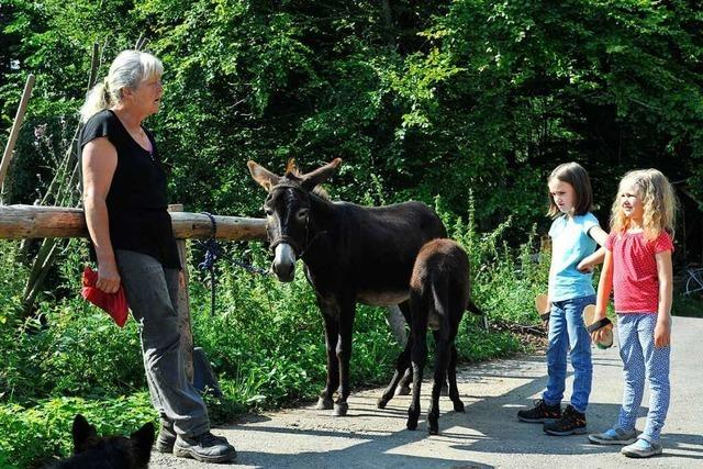 Von St. Peter aus mit dem Esel durch den Schwarzwald wandern
