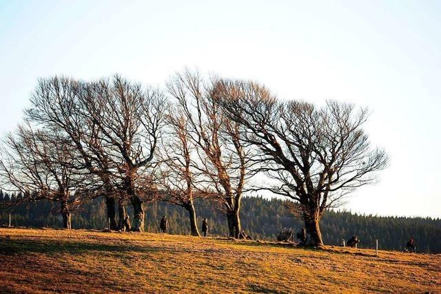Wetterbuchen-Exkursionen mit Ursel Lorenz im Naturschutzgebiet Schauinsland