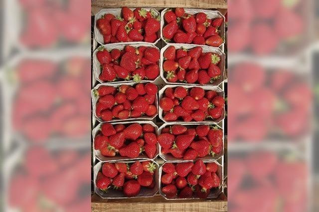 Hommage an die Erdbeere
