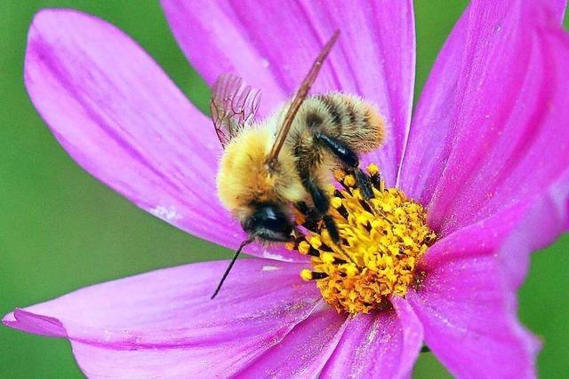 Bundestag beschließt Maßnahmen zum Insektenschutz