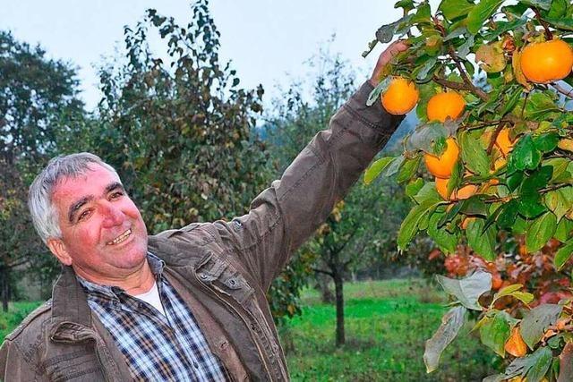 Staufener Obstbauer beweist, dass Wirtschaften ohne Chemie möglich ist