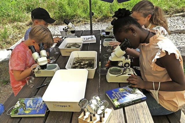 Unterricht neben Blumenwiese und Seerosenteich