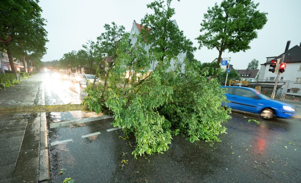 Im Unwetter umgestürzter Baum in Stuttgart  | Foto: Bernd Weissbrod (dpa)