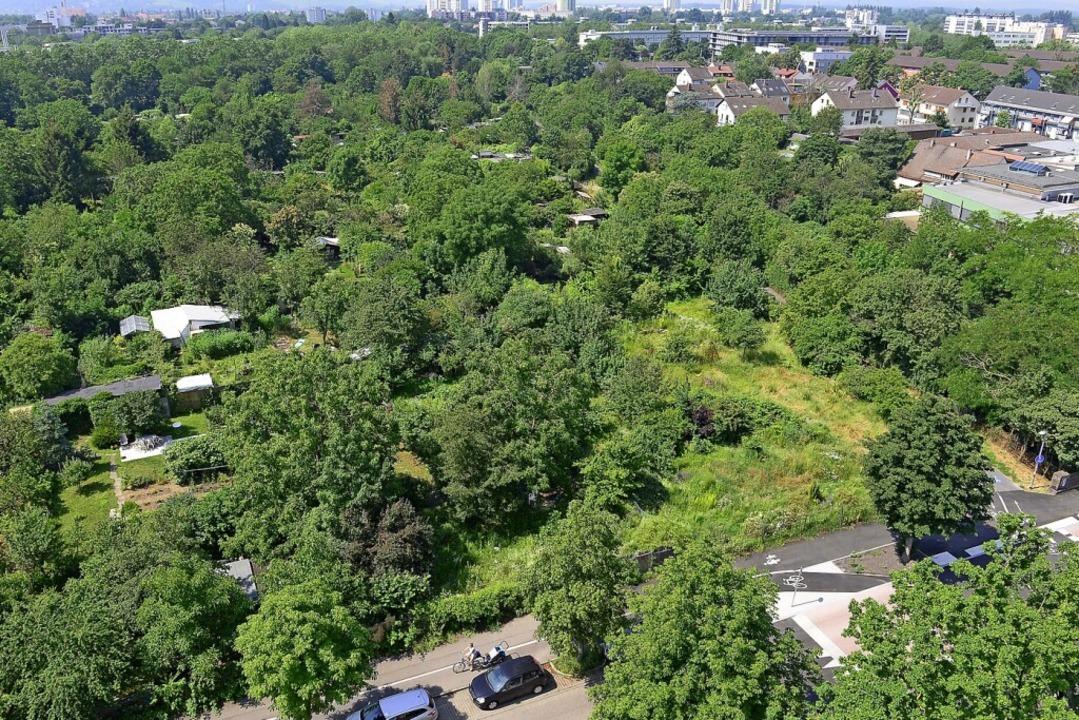 Hier müssen Gärten für den neuen Stadtteil weichen.  | Foto: Ingo Schneider
