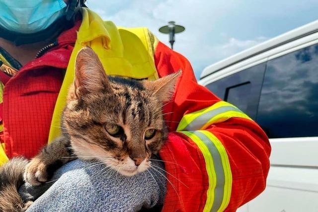 Hund erschnüffelt seit 26 Tagen vermisste Katze unter einem Schachtdeckel