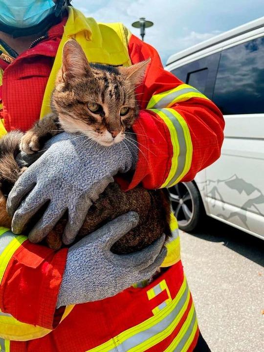 Happy End für  Katze  Saphira, die in ...rwehr aus einem Schacht befreit wurde.  | Foto: Diana Larisch