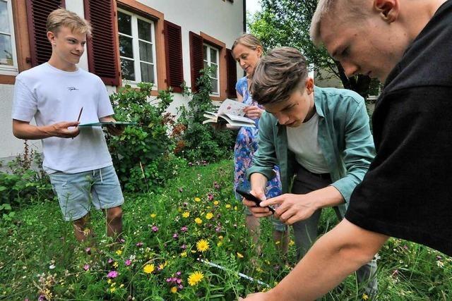 Abiturienten evaluieren gemeinsam mit dem Nabu Blühwiesen in Denzlingen