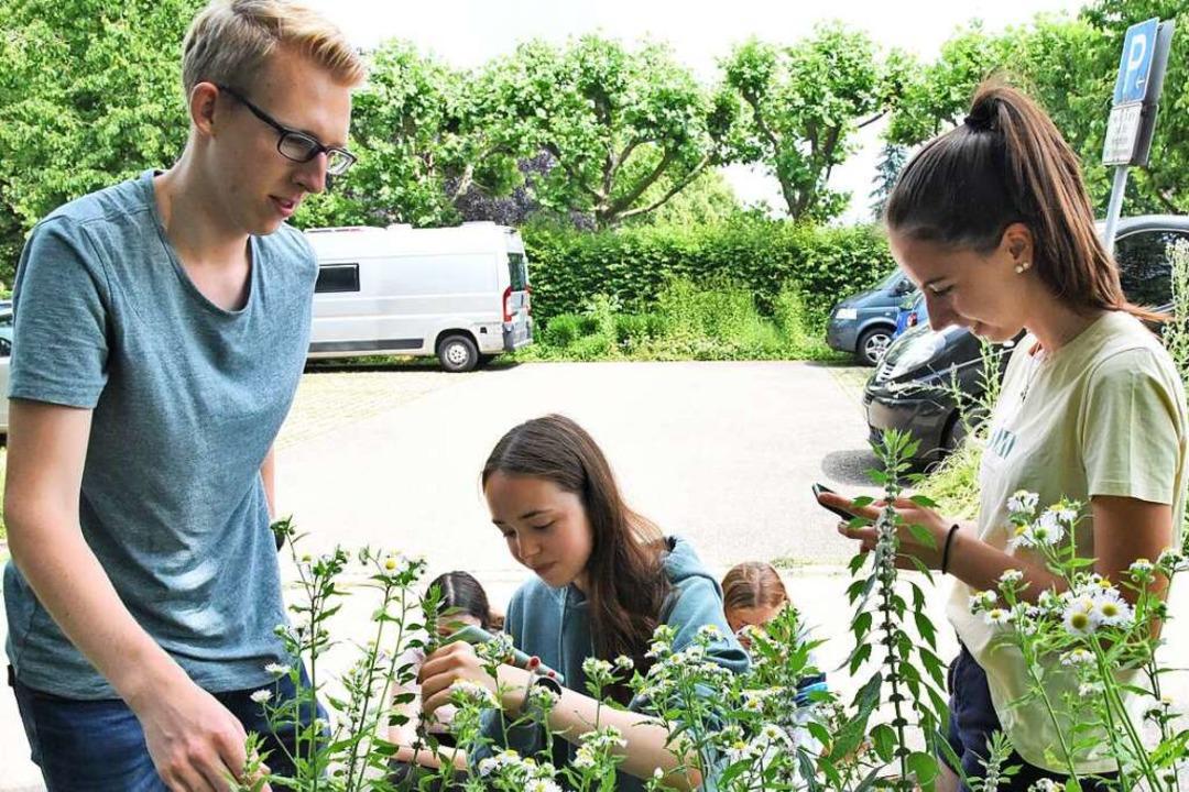 Biologieunterricht im Grünen: Nach den...iesen in Denzlingen entwickelt haben.   | Foto: Markus Zimmermann