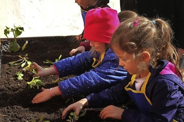 Kinder bauen Gemüse an