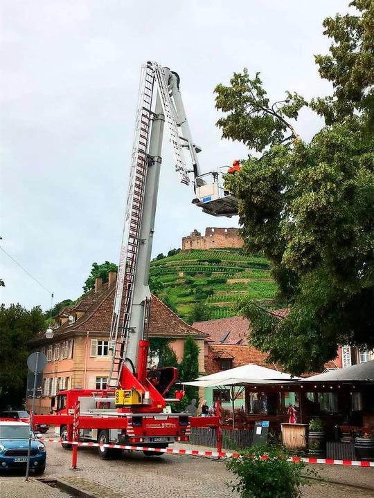 Beim Weinbrunnen in Staufen brach eine Baumspitze ab.    Foto: Feuerwehr Staufen