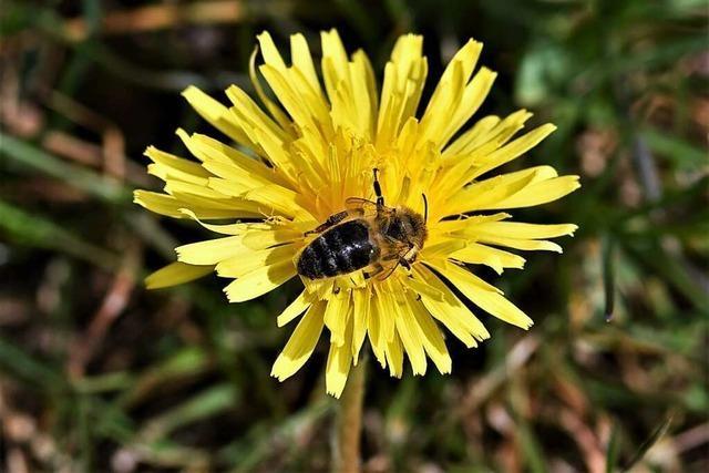 Auch Hobbygärtner können helfen, die Artenvielfalt zu bewahren