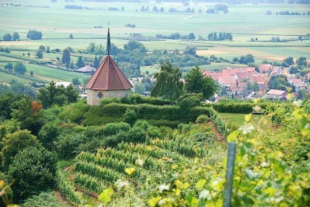 Kapellenrundweg durch Wald und Reben bei Ehrenkirchen begeistert