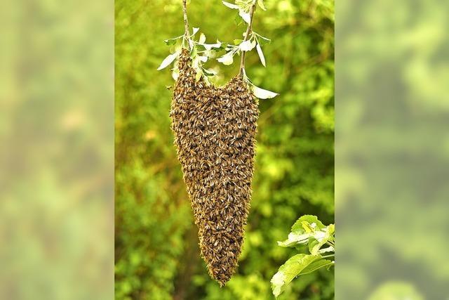 Ein Herz aus Bienen