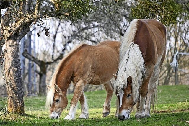 Für das Pferd ist das Putzen wie eine Massage