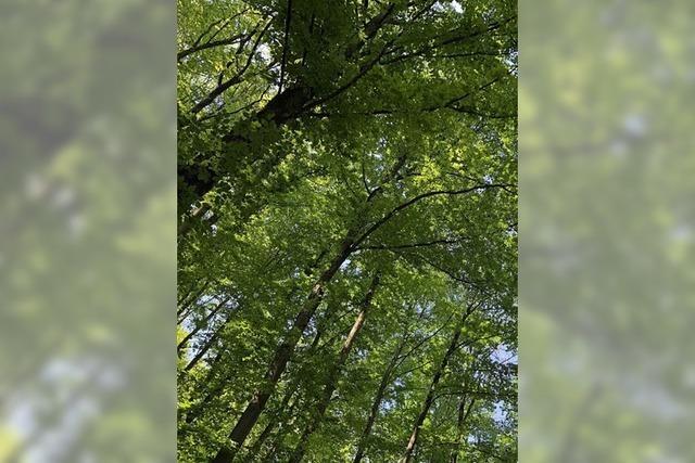 Waldshut-Tiengen punktet im Wald