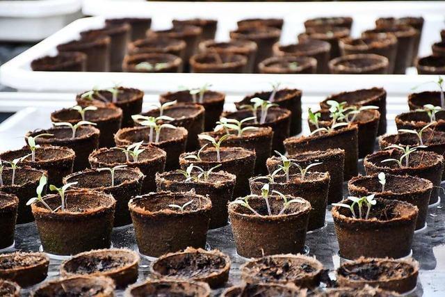 Auf dem Dach des Parkhauses in Neustadt wachsen bald Chilis