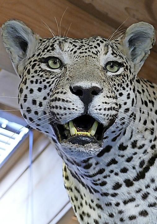 Leopard  | Foto: Juliane Kühnemund