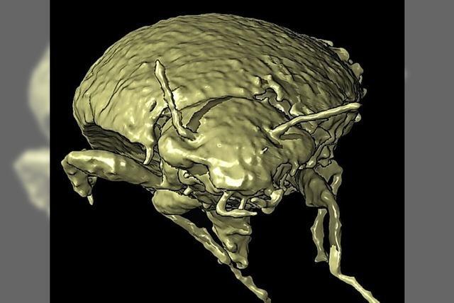 Kurz gemeldet: Käfer aus dem Dinokot