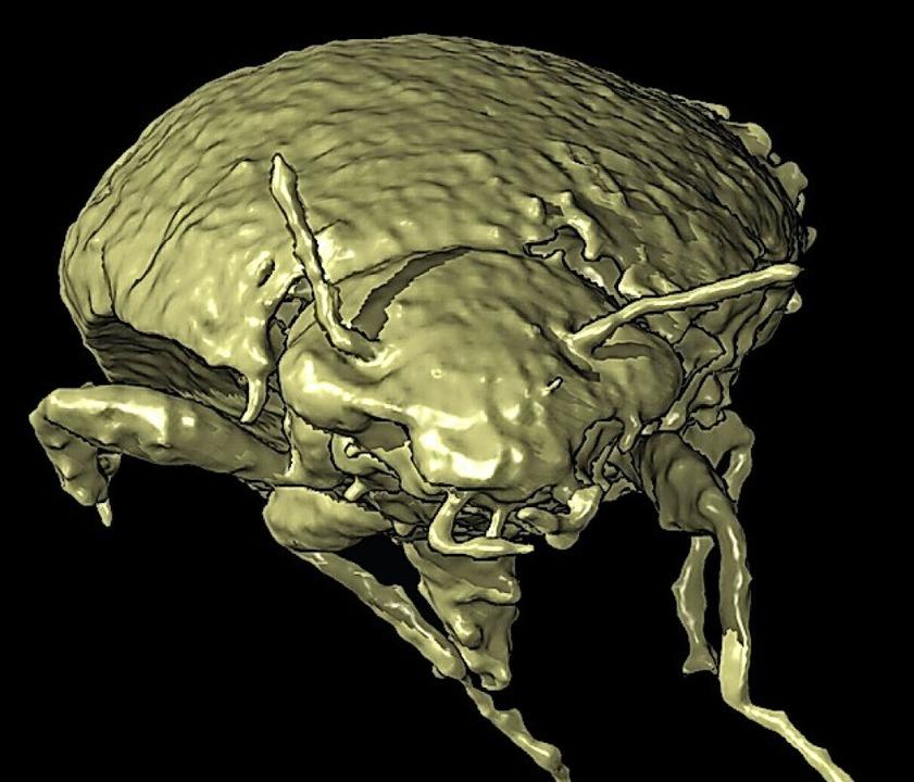 3D-Modell des Kot-Käfers    Foto: Qvarnström et al. (dpa)