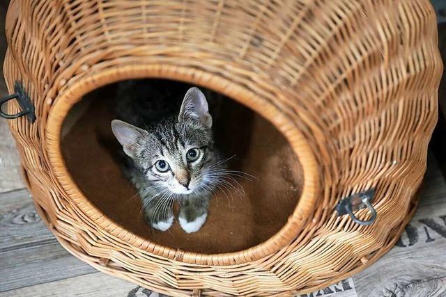Tierrettung bringt Tierschutzverein in eine finanzielle Schieflage