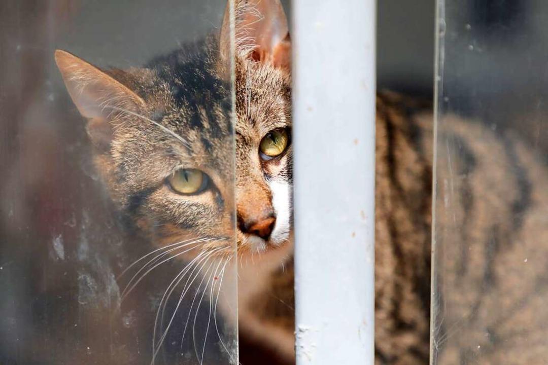 Mehr als ein Drittel der Neuzugänge im Jahr 2020 waren Katzen.    Foto: Christoph Breithaupt
