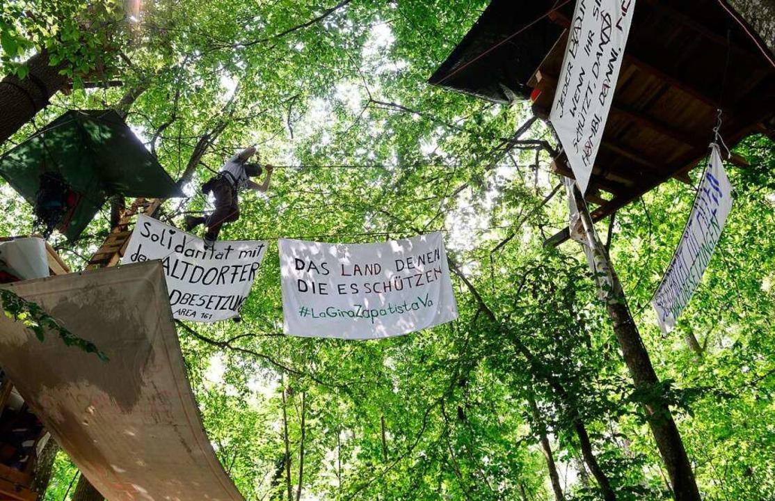 Baumbesetzung im Langmattenwäldchen  | Foto: Ingo Schneider