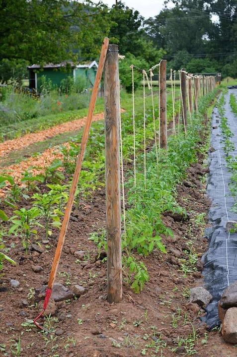 Auf dem Feld wächst das Gemüse, das im Hofladen verkauft wird.  | Foto: Nikola Vogt