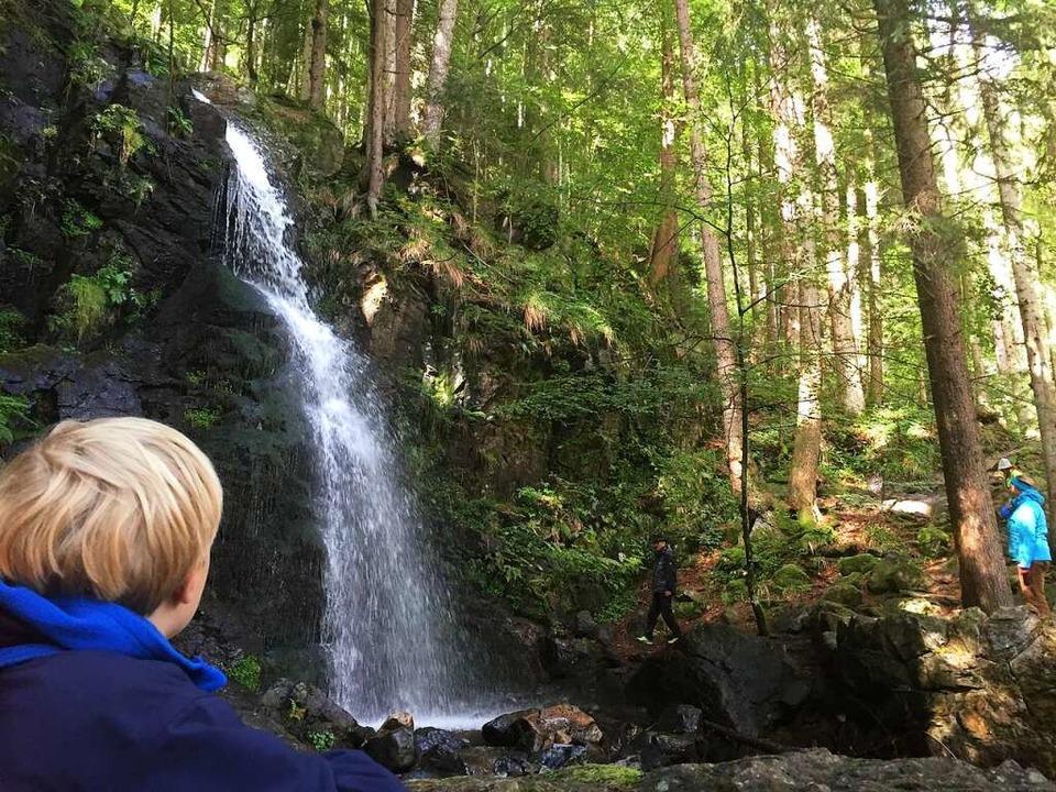 Gebannt  im Bannwald: Zweribach-Wasserfälle im Simonswälder Tal  | Foto: Anselm Bußhoff