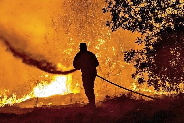Vier Tote bei Waldbränden