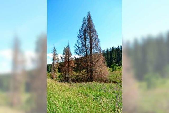 Forst sucht Wege für den Klimawandel