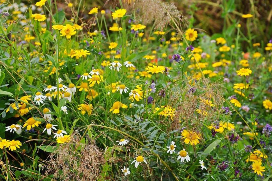 Mehrjährige Blühstreifen entlang von A...aber auch für Vögel , Hasen oder Igel.  | Foto: Jutta Schütz